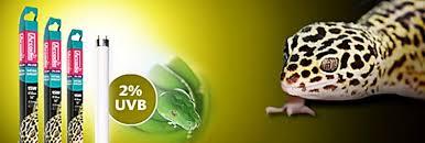 ARCADIA Natural Sunlight loisteputki 2% UVB T5